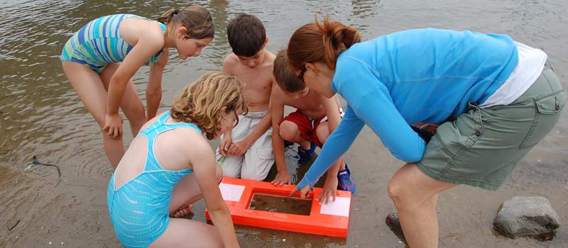 Finding a hermit crab on the beach